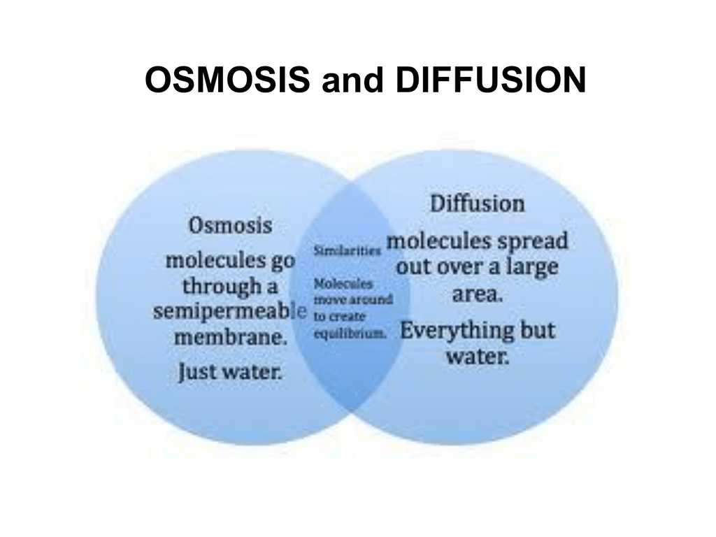 Diffusion and Osmosis Worksheet Answers Biology as Well as Diffusion and Osmosis Worksheet Best Active Transport New G