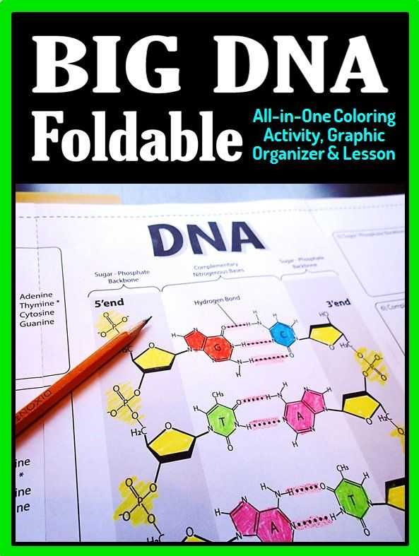 Dna Interactive Worksheet Answer Key with Dna Structure Foldable Big Foldable for Interactive Notebooks or