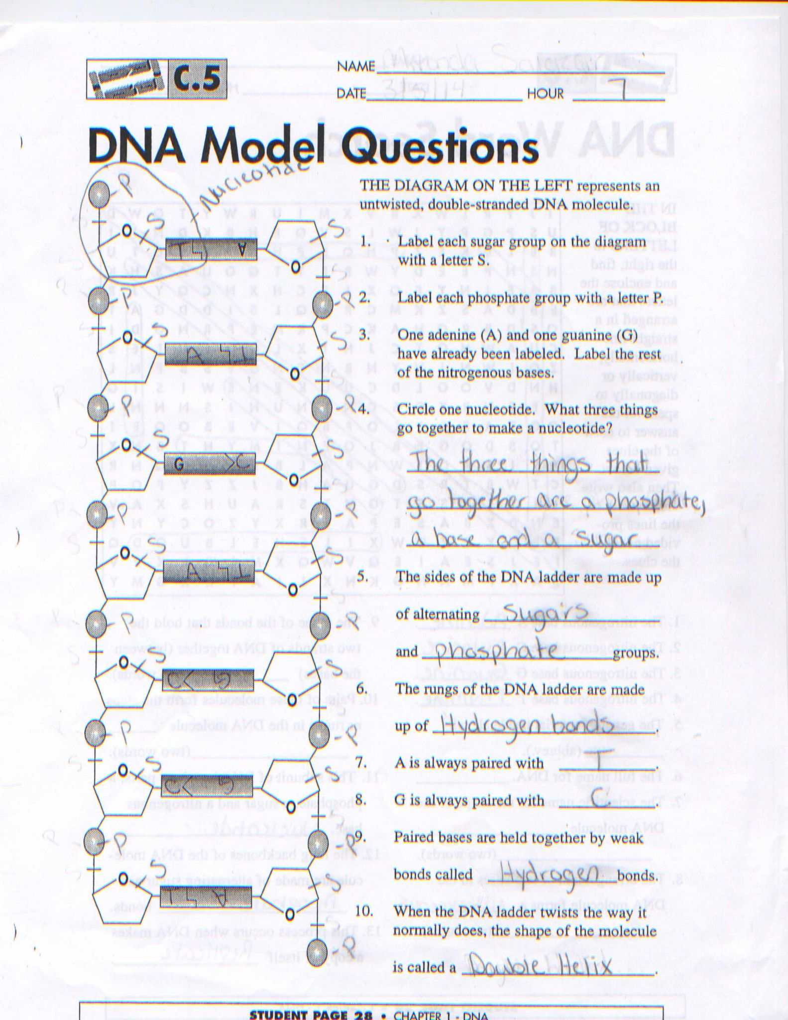 Dna Molecule and Replication Worksheet Answers as Well as Dna Model Worksheet the Best Worksheets Image Collection