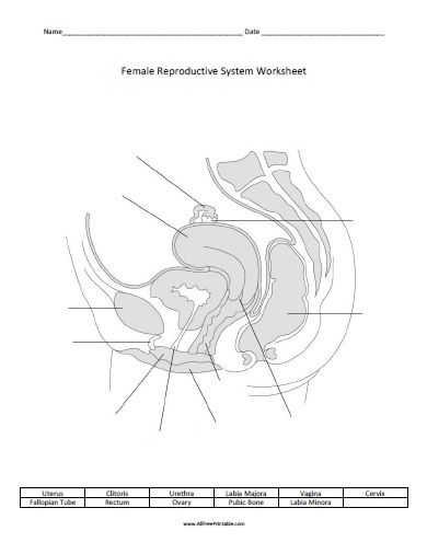 Female Reproductive System Worksheet or 34 Best Human Body Preschool Unit Images On Pinterest