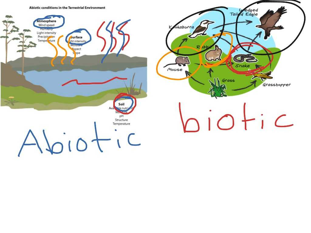 Food Chain Worksheet Answers Or Bio Vocab By Jane Borstad