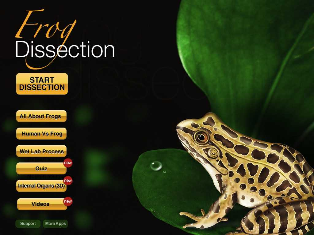 Frog Dissection Worksheet and Frog Dissection App Store