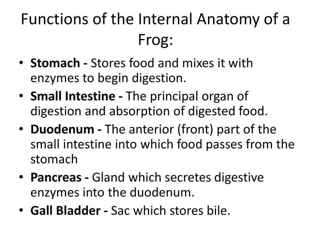 Frog Dissection Worksheet or Frog Body Parts and Functions Ppt