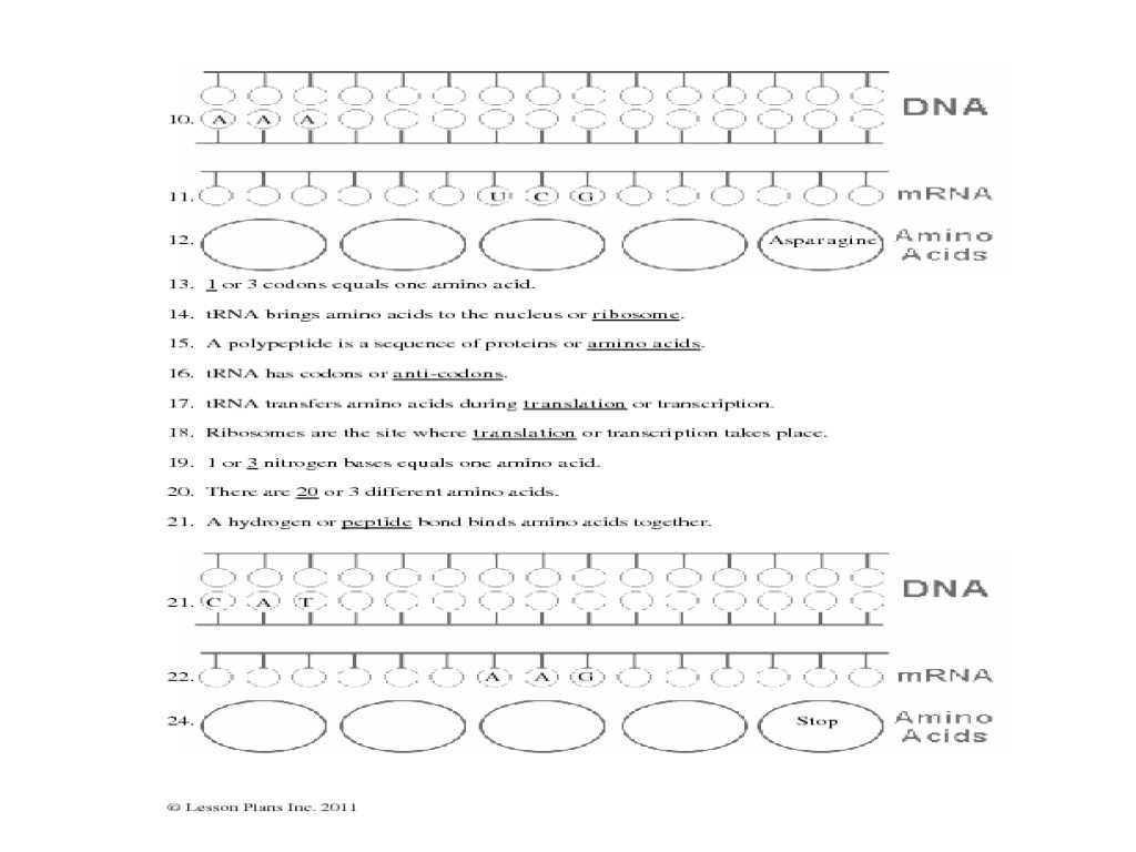 Genetics Basics Worksheet as Well as Free Worksheets Library Download and Print Worksheets Free O