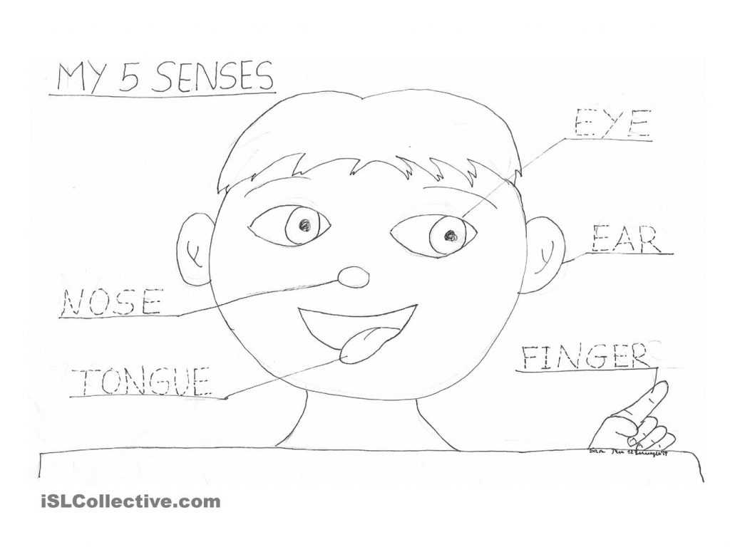 Grade 3 English Worksheets as Well as Senses Coloring Pages and Coloring Pages