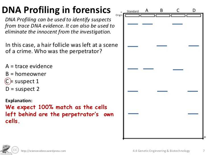 Hair and Fiber Evidence Worksheet Answers as Well as topic 3 Genetics Monique Lowes Ib Blog