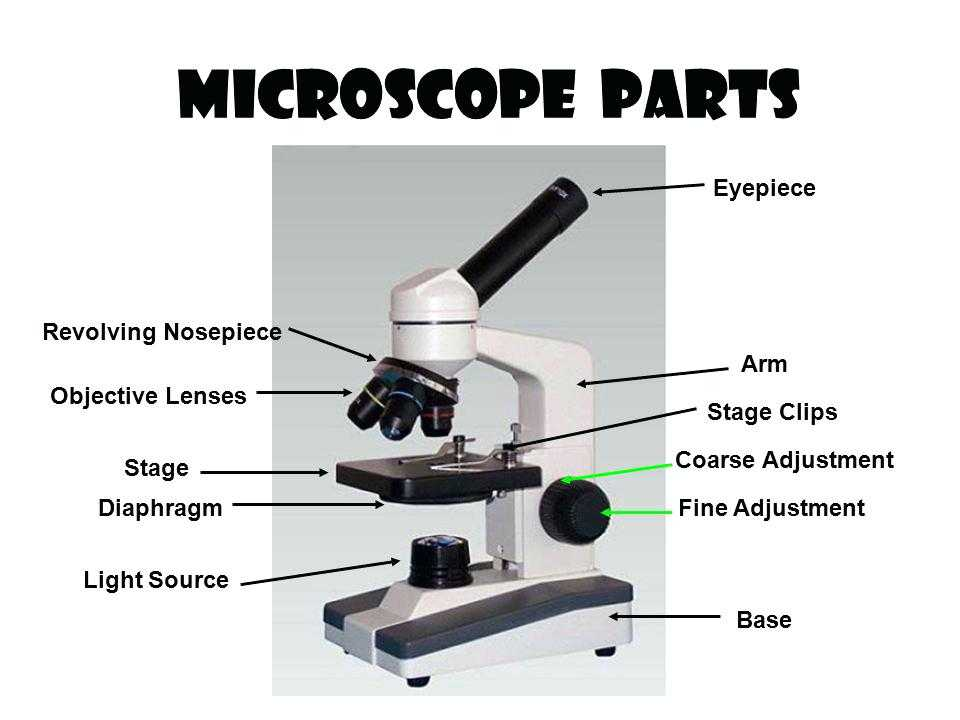 Microscope Parts and Use Worksheet Answers or Parts A Microscope Worksheet Answers Parts Microscope