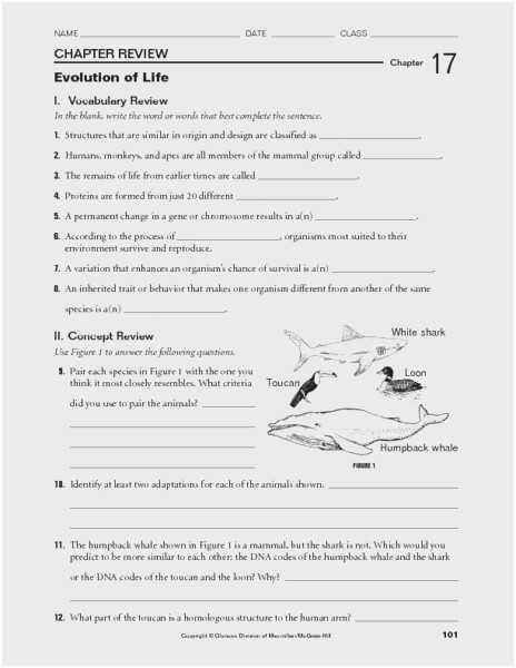 Natural Selection Worksheet and Evolution Worksheet Great Patterns Evolution Worksheet