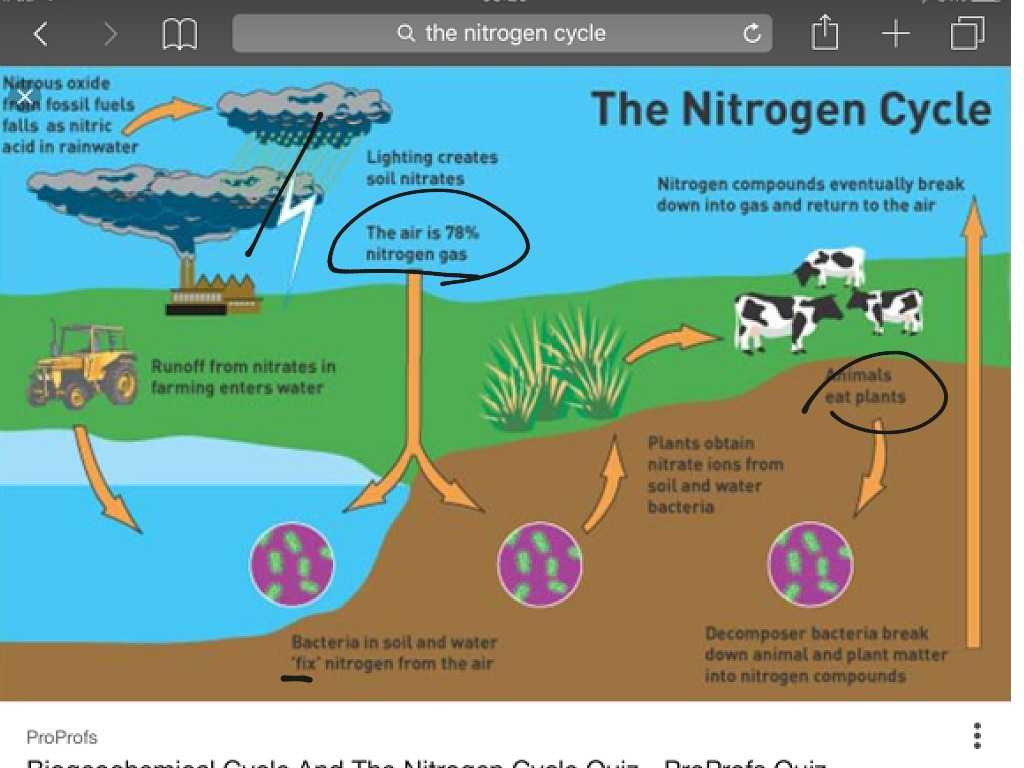 Nitrogen Cycle Worksheet Answers Along with the Nitrogen Cycle Science Earthscience Showme