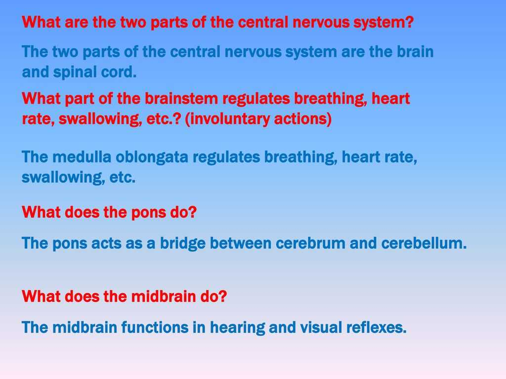 Organization Of the Nervous System Worksheet Answers or Nervous System Notes Part 2 Ppt