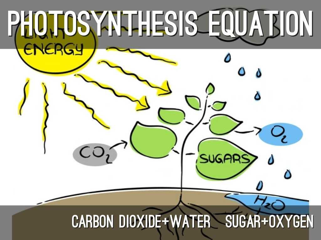 Photosynthesis & Cellular Respiration Worksheet Answers with Synthesis and Cellular Respiration Project by