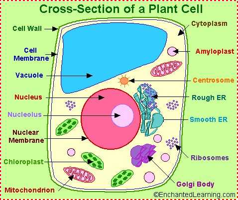 Plant Cell Worksheet or 12 Best 3d Plant Cell Model Twins 6th Grade Project Images On
