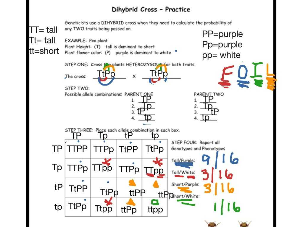 Slope Intercept form Worksheet with Answers and 14 Lovely Pics Punnett Square Practice Worksheet Answers