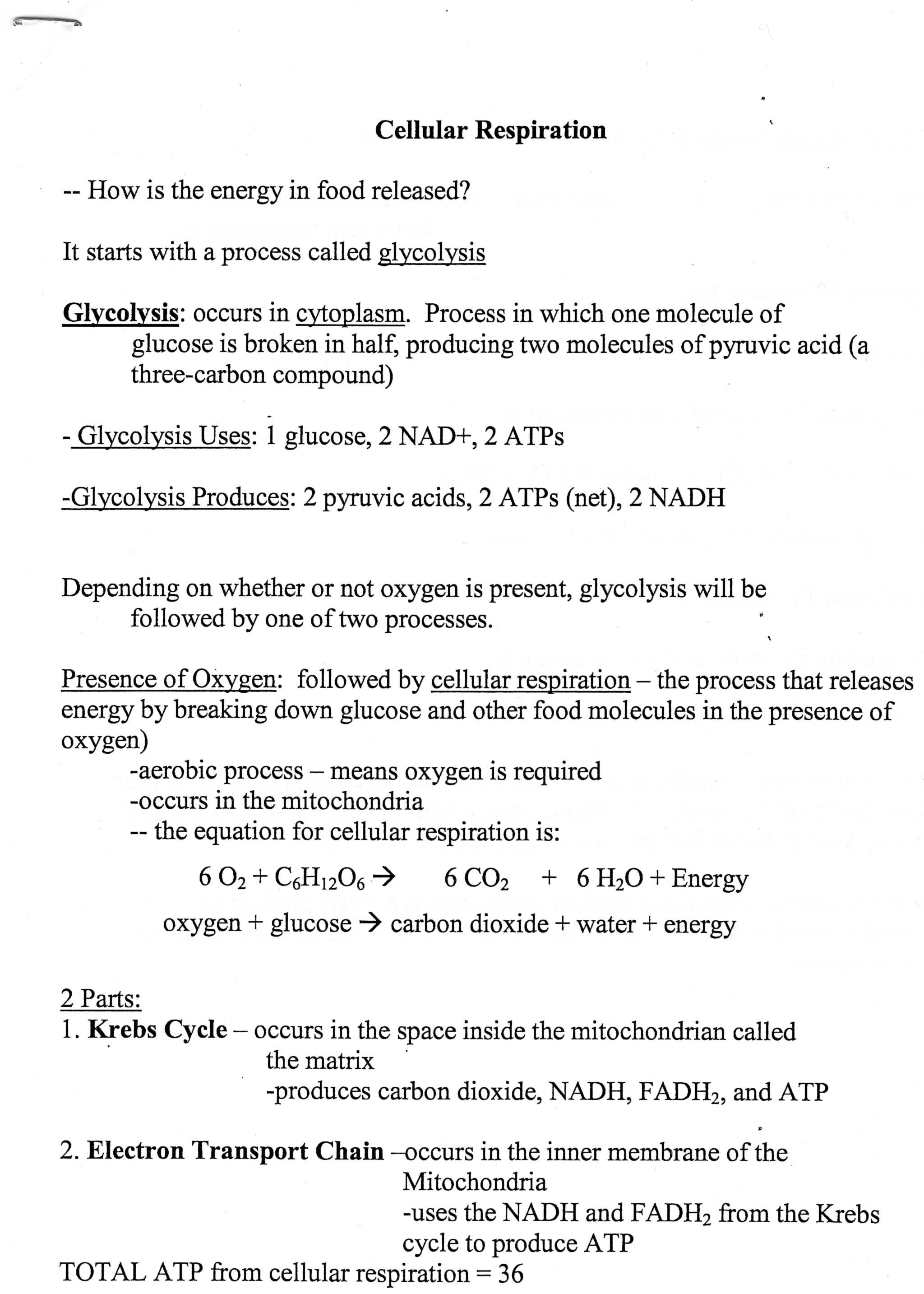 The Absorption Of Light by Photosynthetic Pigments Worksheet Answers together with Synthesis Starts with Worksheet Answers 28d8ed312a9b Battk
