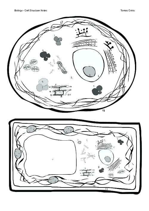 The Animal Cell Worksheet and Animal Cell Coloring Worksheet Plant and Animal Cell Color and Label