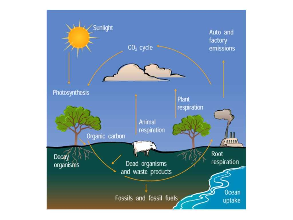 The Carbon Cycle Worksheet Answers together with Raptor Science Water Cycle Vs Carbon Cycle