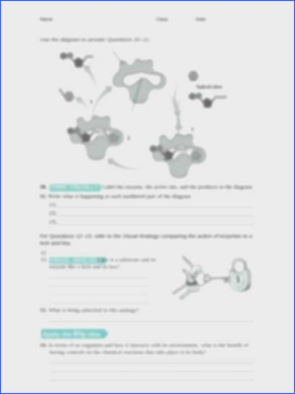 Virtual Lab Enzyme Controlled Reactions Worksheet Answers or Enzyme Worksheet