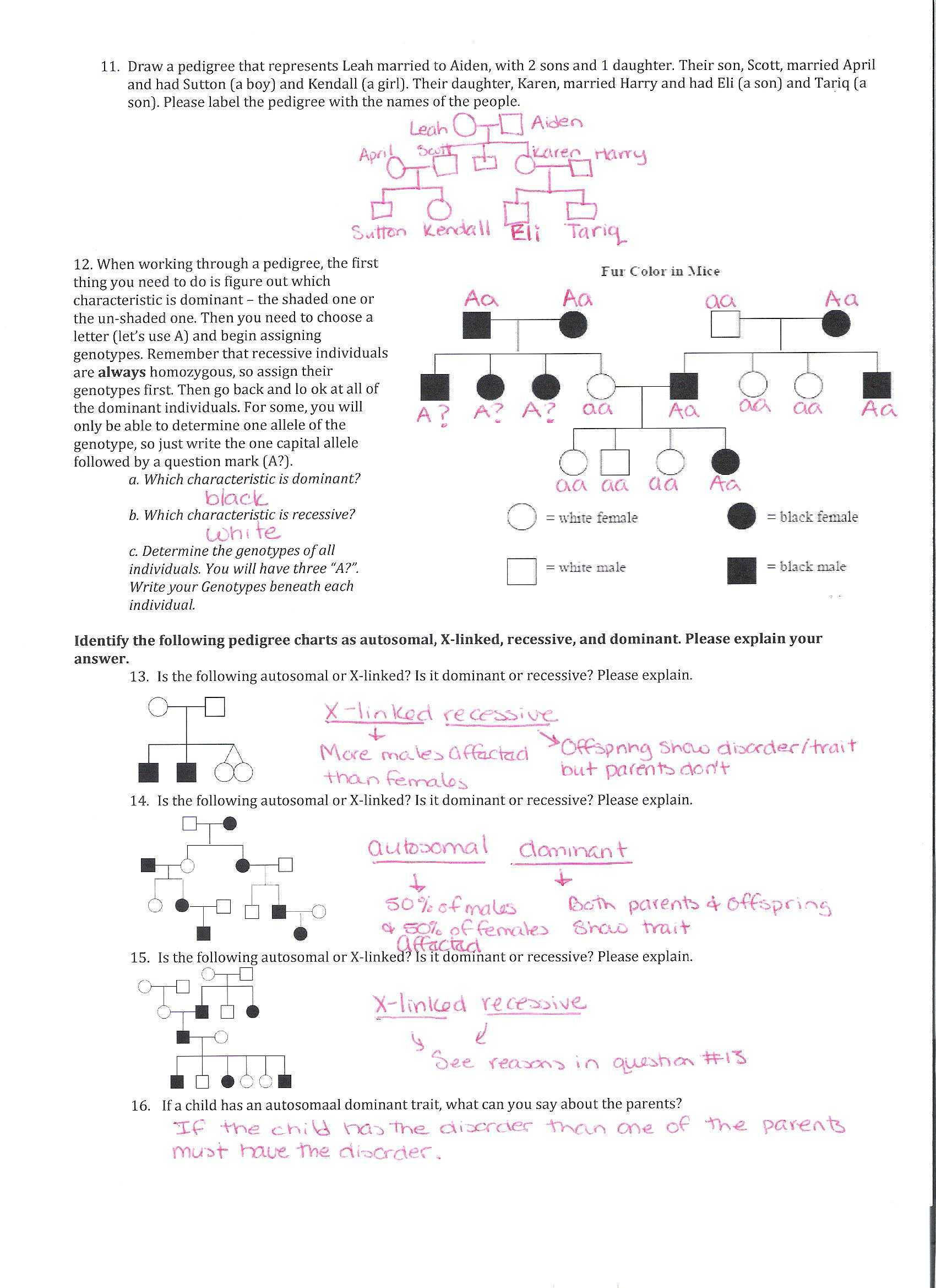 Worksheet Factoring Trinomials Answers Key as Well as Genetics Pedigree Worksheet the Best Worksheets Image Collection