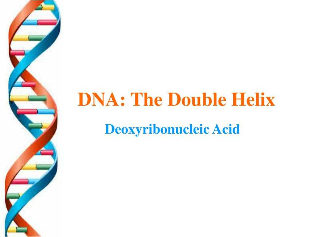 Helix Dna Worksheet Printable Worksheets And Activities For Teachers Parents Tutors And Homeschool Families
