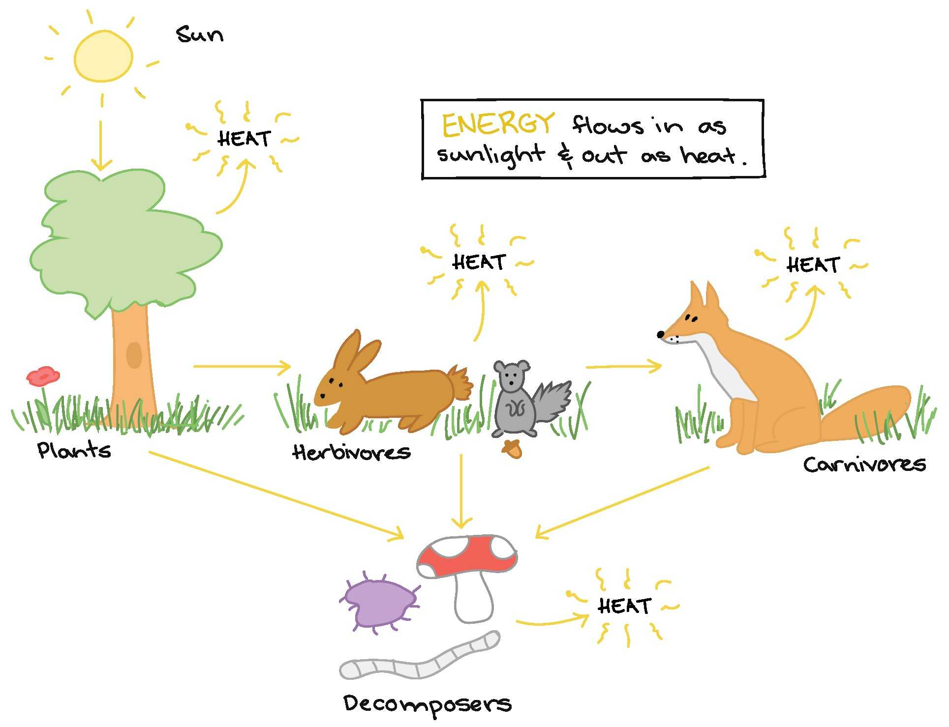 Food Chains And Webs Worksheet
