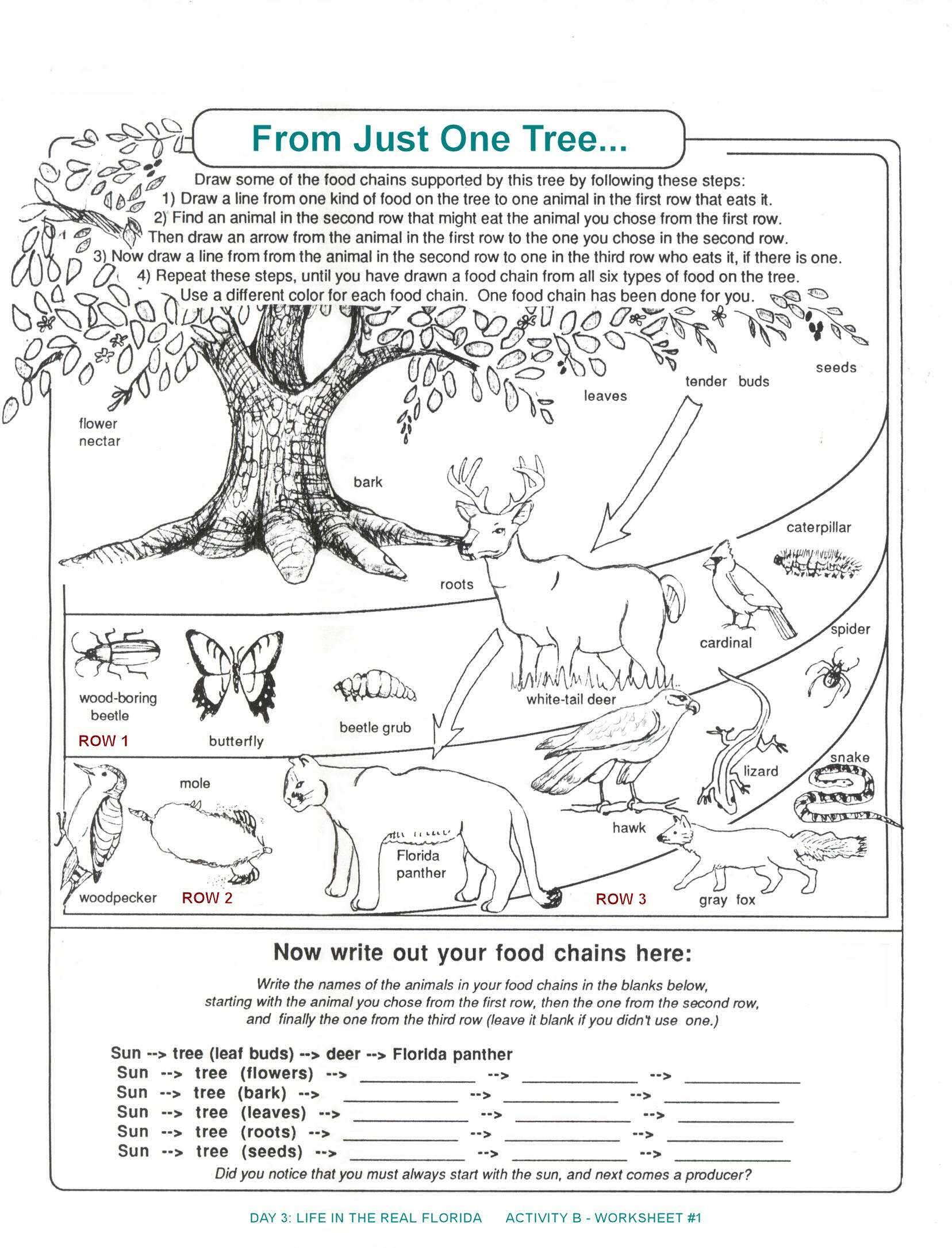 Food Chains and Webs Worksheet together with Food Webs and Food Chains Worksheet Inspirational 58 Best Food