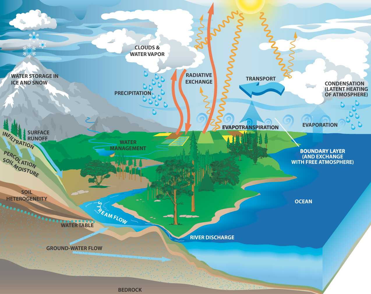 Layers Of the Rainforest Worksheet together with Water Cycle