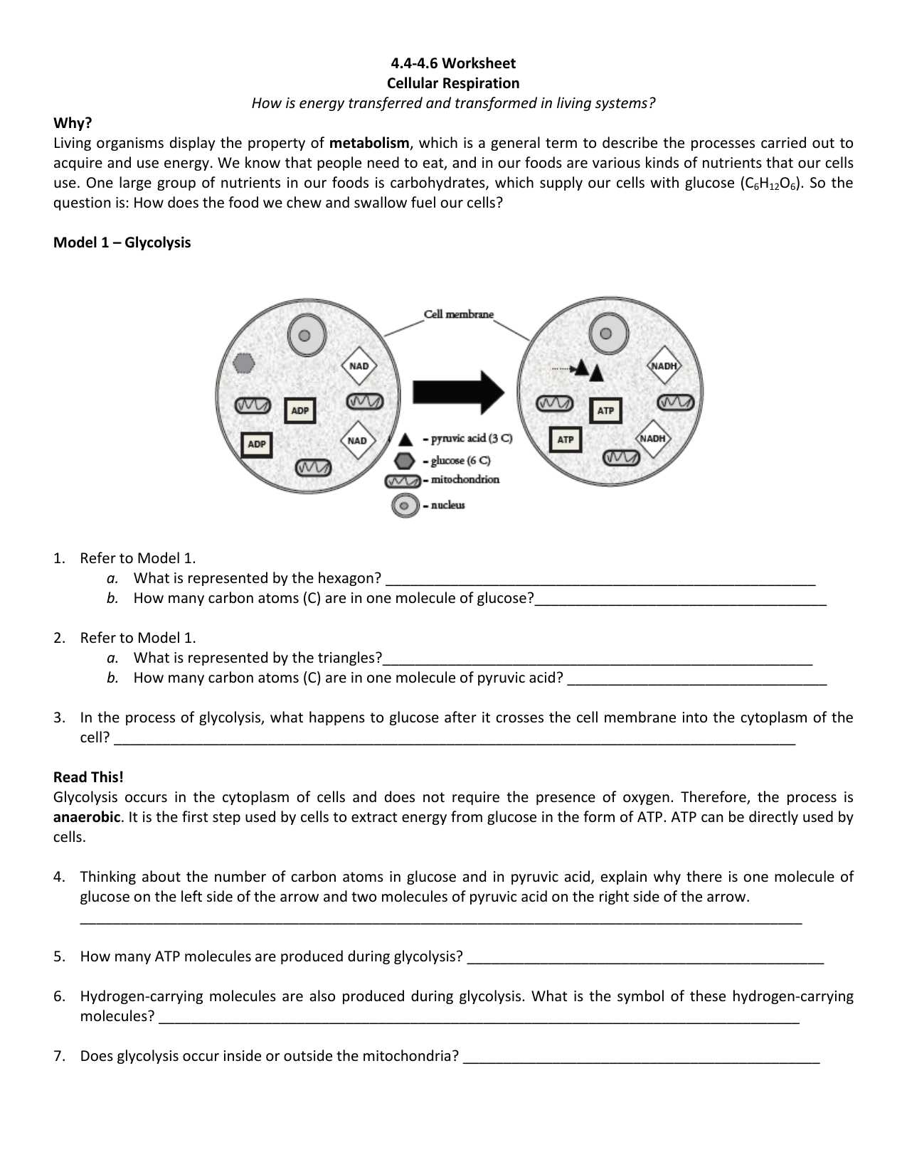 Photosynthesis and Cellular Respiration Review Worksheet Answer Key together with Worksheet Energy Transfer Worksheets Middle School Carlos Lomas