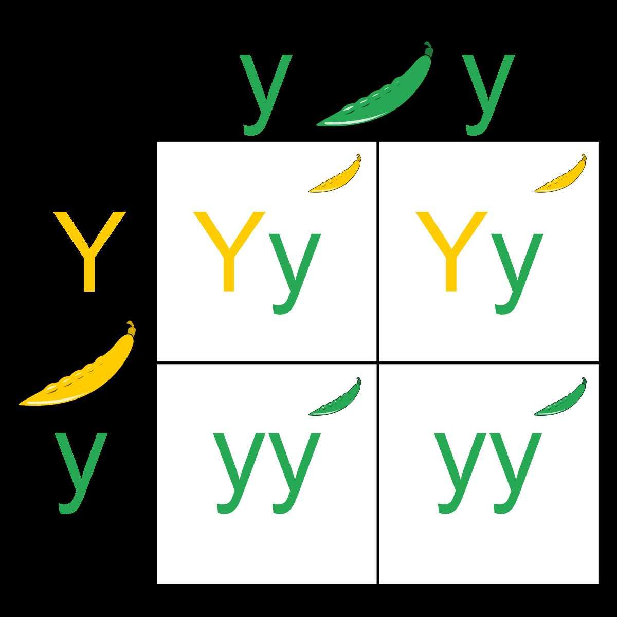 Scientific Method Worksheet 5th Grade With Punnett Square