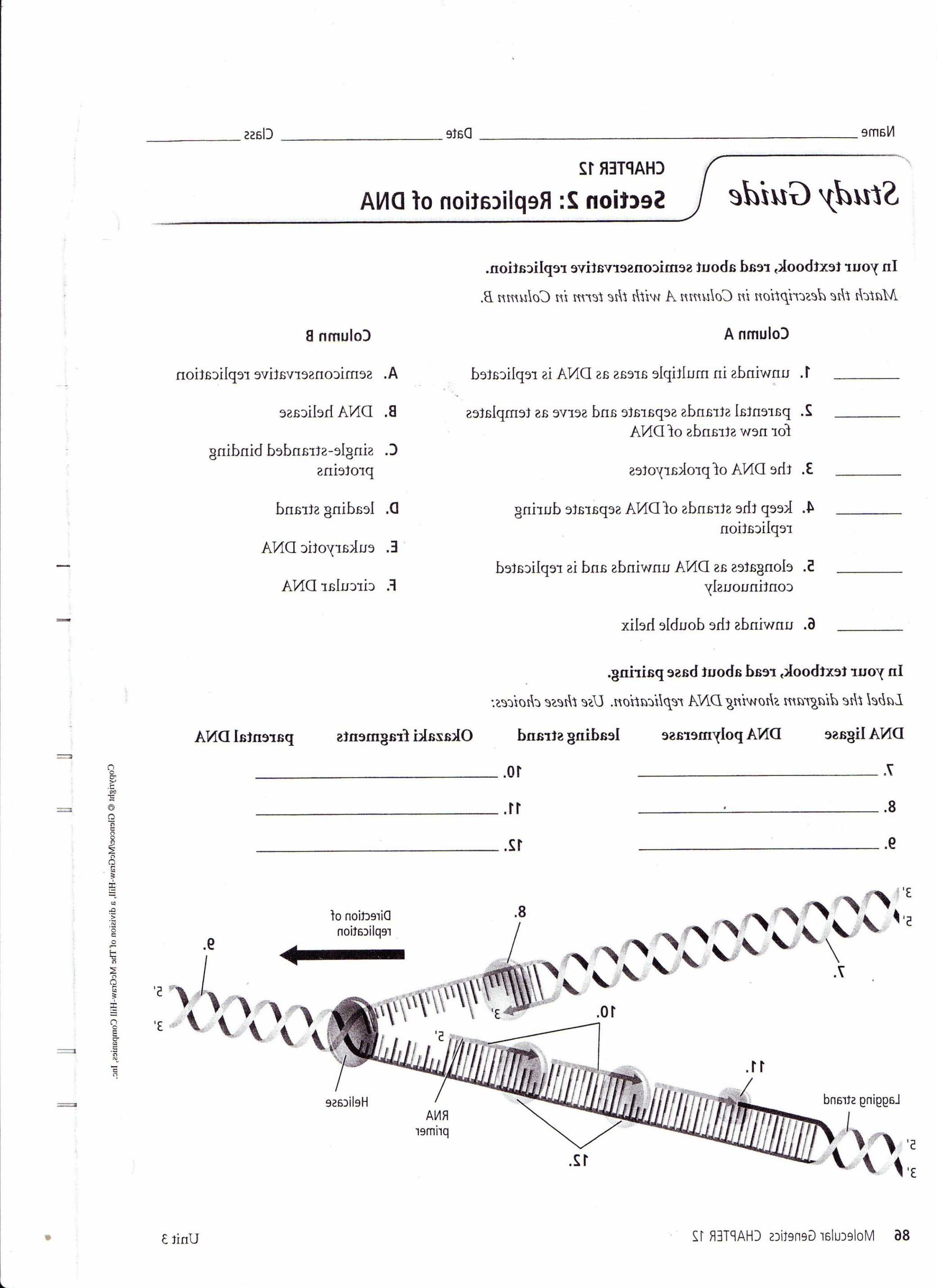 Transcription Worksheet Answer Key with Worksheet Dna Replication Worksheet Key Concept Dna Replication