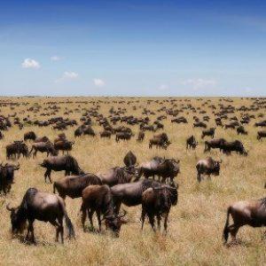 semestafakta-Maasai Mara