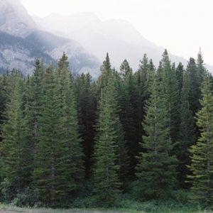 semestafakta-evergreen