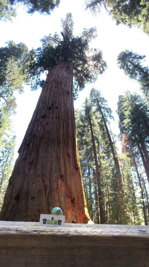 Sequoia (2)