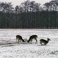 Winterwandern im Lainzer Tiergarten