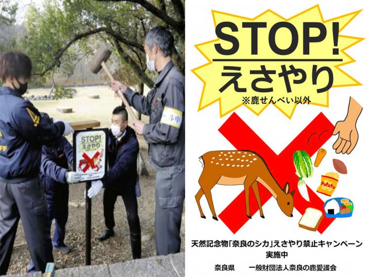 La città di Nara vieta a turisti e locali di nutrire i cervi