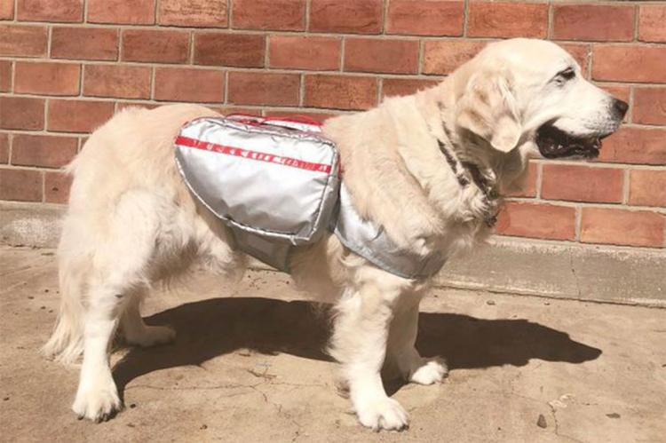 Azienda giapponese produce borse di sopravvivenza per cani in caso di disastri naturali
