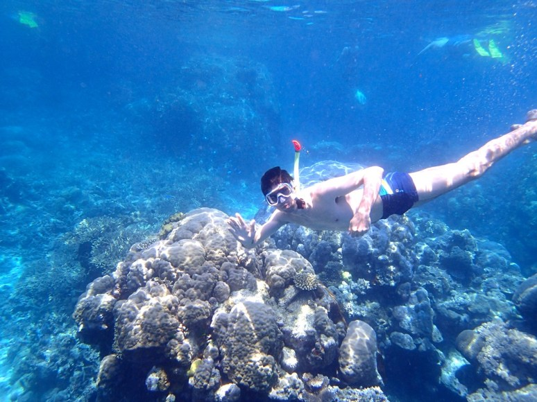 Snorkel en Great Barrier Reef Australia