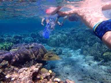 Tour Snorkel Great Barrier Reef Australia