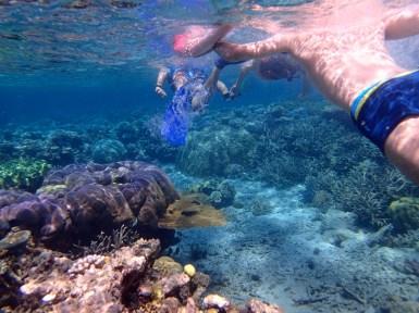 Tour Snorkel Great Barrier Reef Australia
