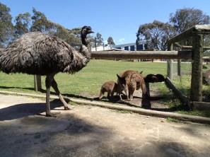 Animales libres por el parque