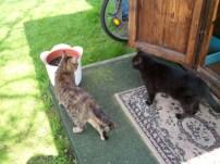 Katze Hermine ( braun getigert mit wenig rot ) ist die Kleinste, aber auch die Wildeste und greift die anderen Katzen an. Vor Chester zieht sie die Pfote zurück , er lässt sich nichts gefallen. Mit Micki (schwarz) lebt sie in einer Laube und er bekommt oft eine Ohrfeige der Arme. Er ist ein Schmusetier und will den ganzen Tag nur in der Wohnung sitzen. Er war sehr krank und hat sich dabei sehr verwöhnen lassen und jetzt soll es so weiter gehen.