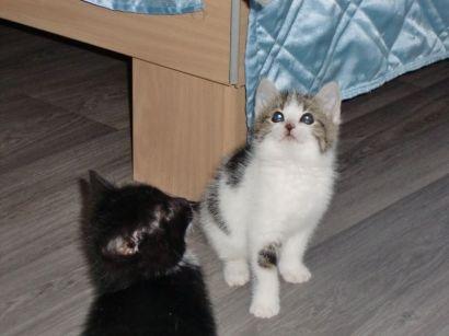 Katzenbaby2