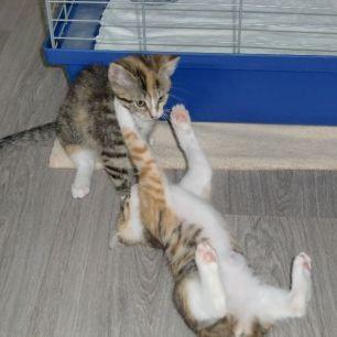 Katzenkinder2