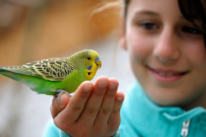 picture of young girl with a parakeet