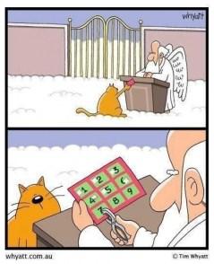 Afbeeldingsresultaat voor kat negen levens