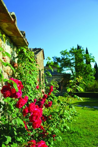 Bright red roses climb up the side of one of Montestigliano's historic buildings.