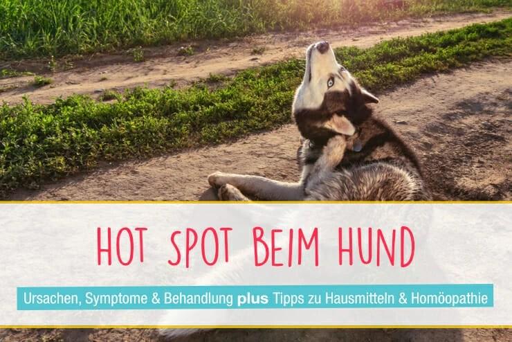 Hot Spot Beim Hund Ursachen Diagnose Behandlung