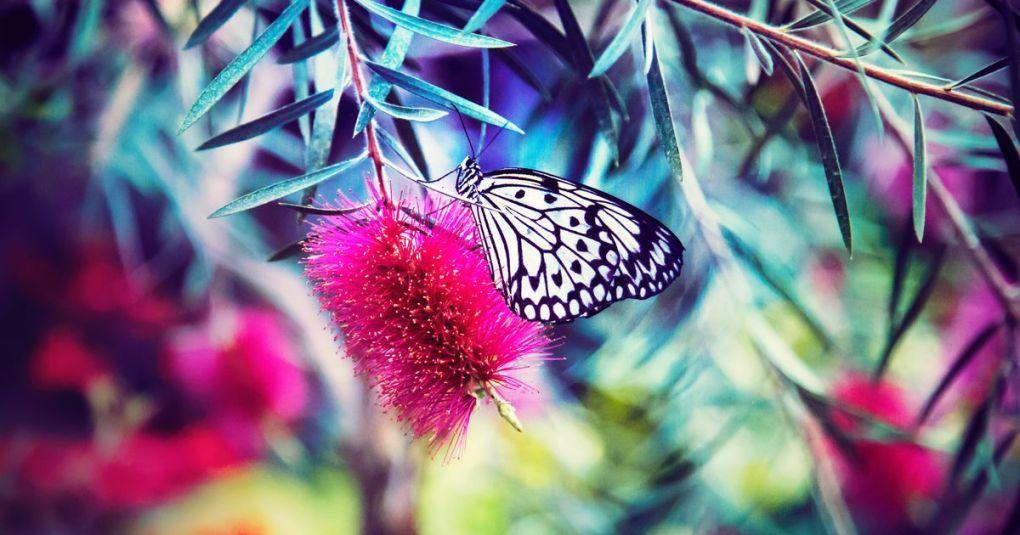 V življenju se je potrebno večkrat globoko preobraziti
