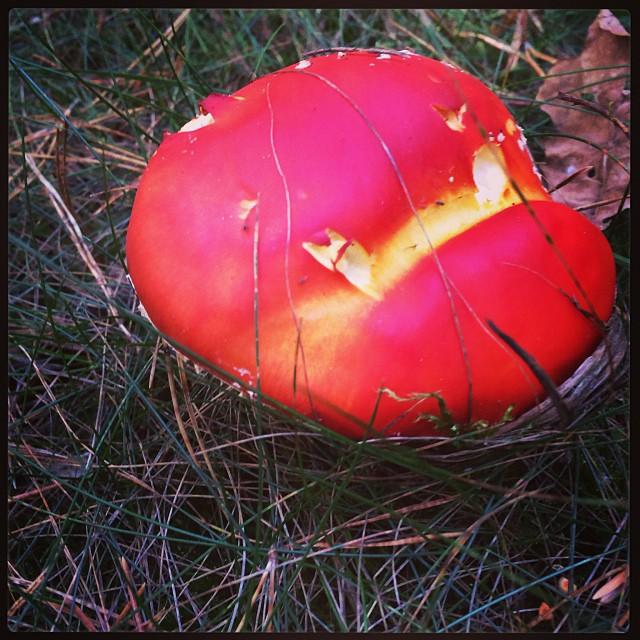 """Mehr Pilzsammler unterwegs als Pilze unterwegs"" sagt der Fachmann. Recht hat er. - via Instagram"