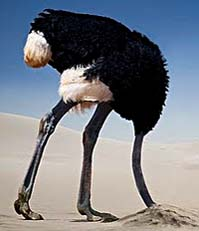 ostrich-head-in-sand-2