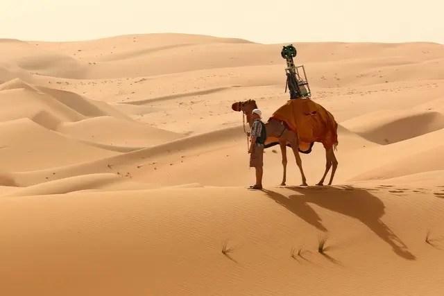 kamel i Förenade Arabemiraten